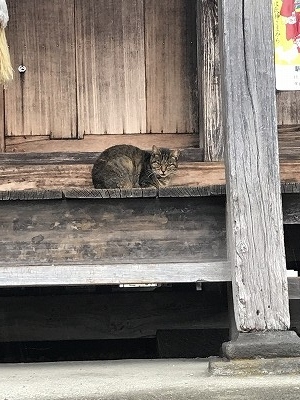 お出迎えしてくれた子猫ちゃんです。ちょっと、目が鋭いので、「あんた方、誰?」と思っているのかも・・・・(笑)