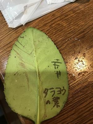 会員さんが、傷をつけて書いた葉っぱです(^^♪