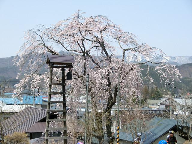 高台に位置する「サブロウ桜」