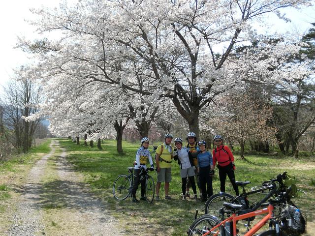 丹藤の桜並木