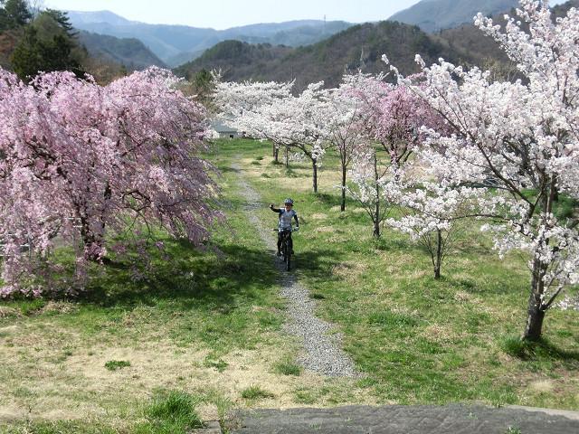 最後は円山公園にいて