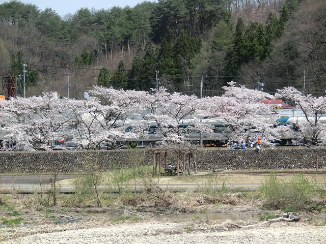 開通したばかりの特急リバティが桜の下を走る!