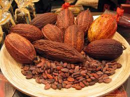 Cacao, rapporté du Mexique par Cortès vers 1524