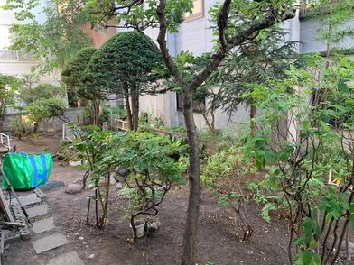 手抜き除草と数多くの樹木の剪定