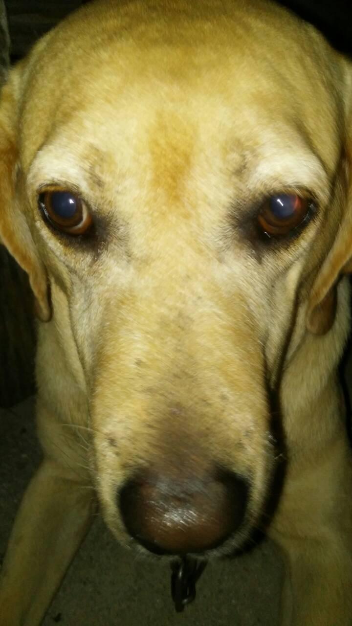 (画像)看板犬シェイク