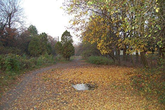 Осень в Ужгороде