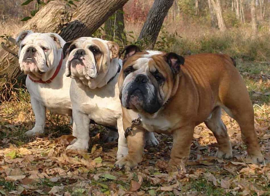Kuba, Doroteya & Markiz