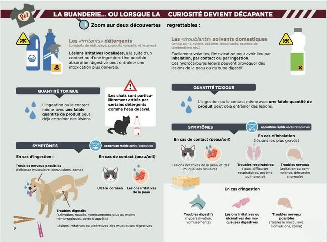 Affiche des dangers pour le chien présents dans les buanderies par coach canin 16 éducateur canin charente