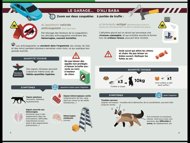 Schéma des dangers pour le chien présents dans les garages par coach canin 16 éducateur canin charente