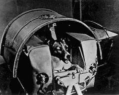 premier chien Laïka à aller dans l'espace par Coach canin 16 educateur canin à cognac
