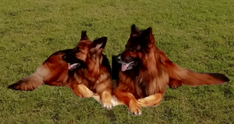 Lezay chienne active participant très bien au jeu