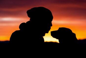 un chien et une femme face à face sous un coucher de soleil par coach canin 16 educateur canin charente