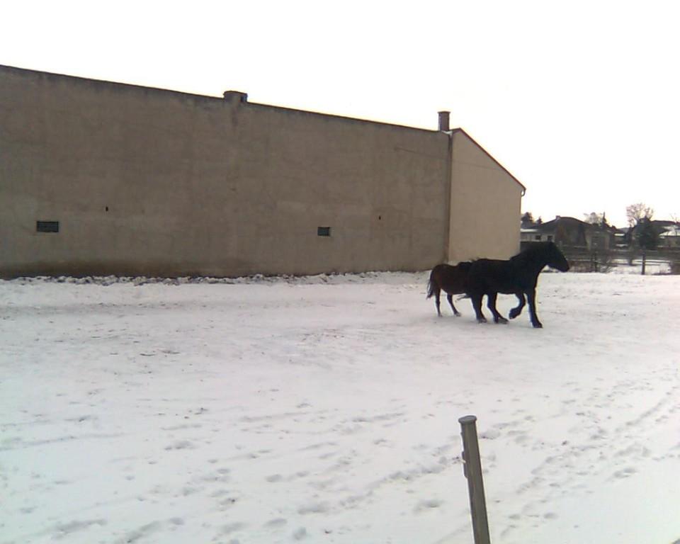 Balgen im Schnee