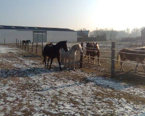Flirten mit den Nachbarspferden! :-)