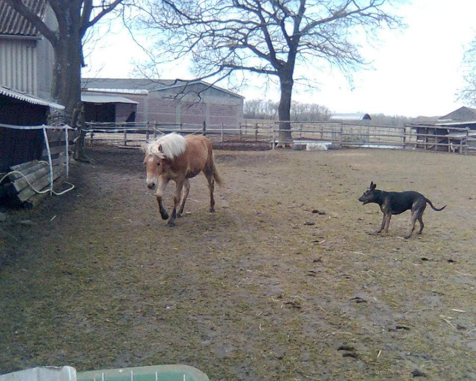 Auch Apollo will das neue Familienmitglied endlich näher kennenlernen!