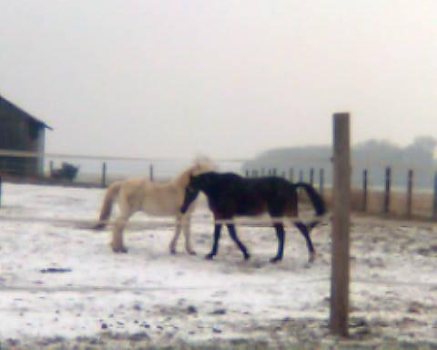 Leise rieselt der Schneeeeee.........Jänner 2009