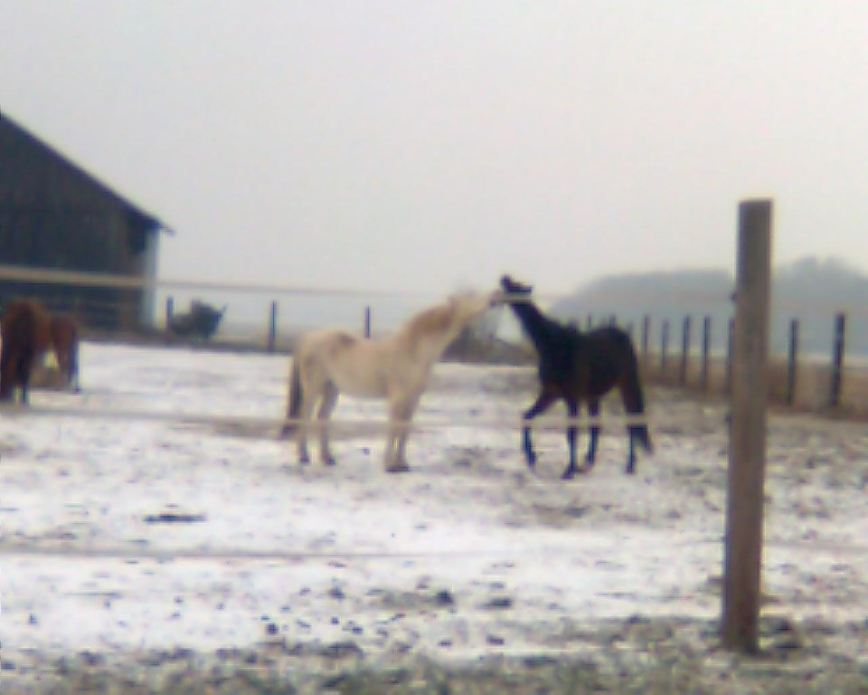 Spiel & Spass im Schnee am 06. Jänner 2009