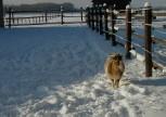 Nanni im Schnee