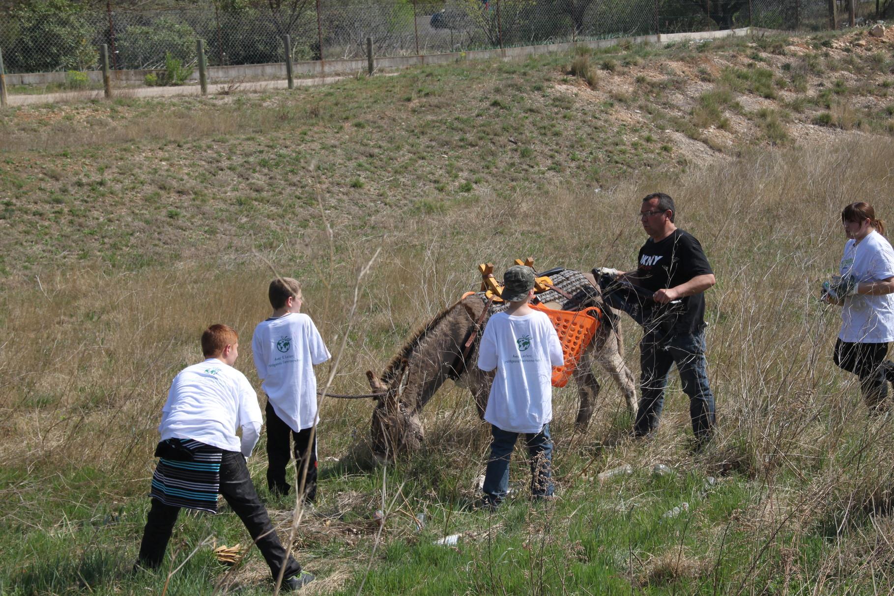 Les ânes participent eux-aussi en coupant l'herbe au plus ras.