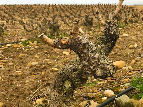 ファウスティーノ・リベロ・ウレシア:次の収穫に向けて