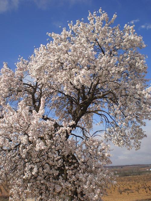 ベラ・デ・エステナス:自然の花々に囲まれたぶどう畑