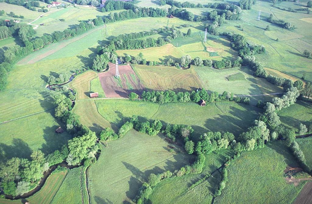 Haselböckau: Feuchtwiesenlandschaft mit zunehmenden Baumhecken