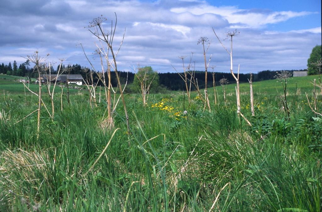 Wiesenbrachen bieten optimales Angebot an Jagdwarten