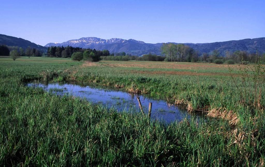 Naturschutzgebiet Kremsauen: ein noch zu kleines Rückzugsgebiet für Tiere und Pflanzen