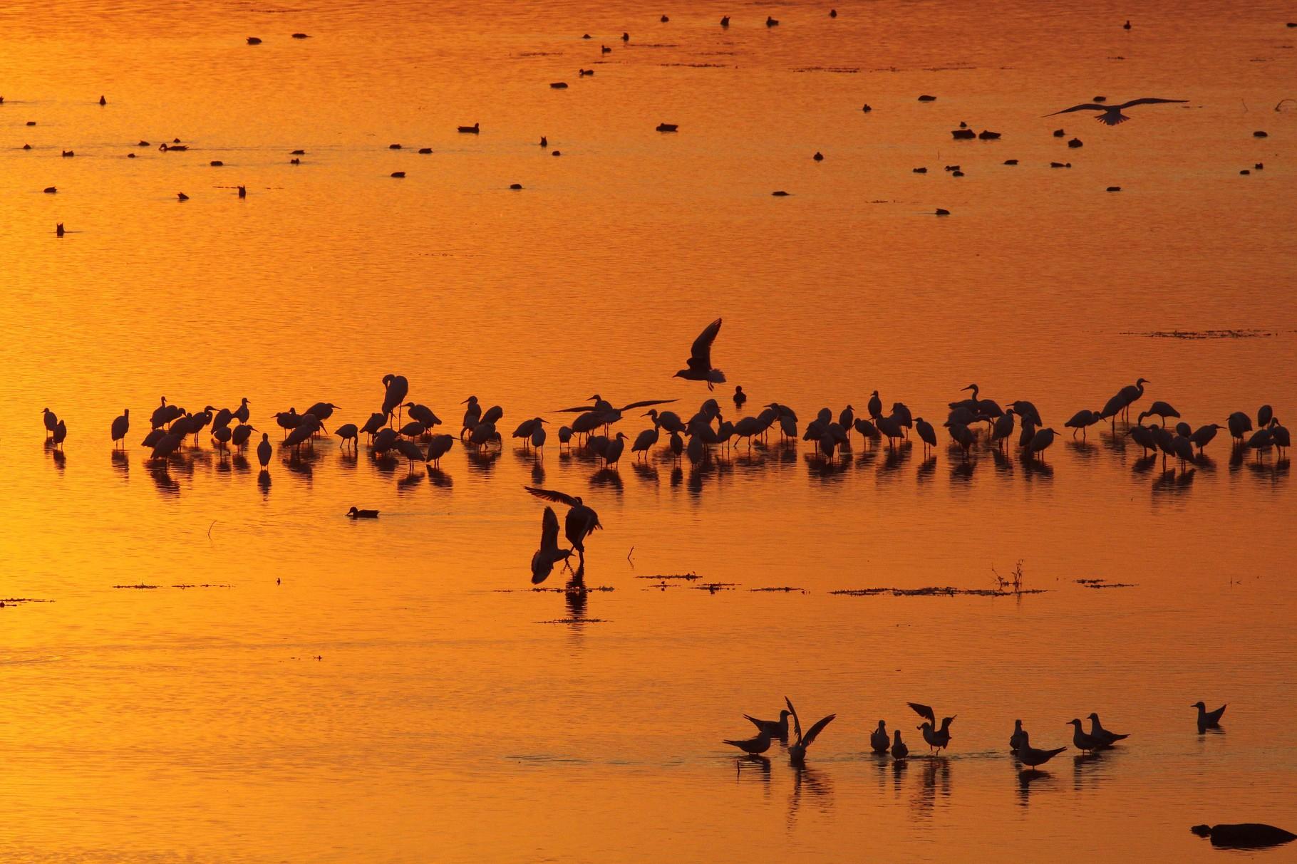 Abendstimmung am Kerkini: ein paar der tausenden Wasservögel, die hier von der Bevölkerung akzeptiert werden