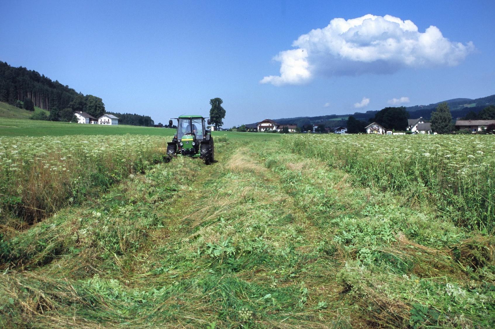 Um Nester und nicht flügge Jungvögel zu schützen, bietet das Land Oberösterreich Förderprämien für verspätete Mahd der Brutwiesen an.