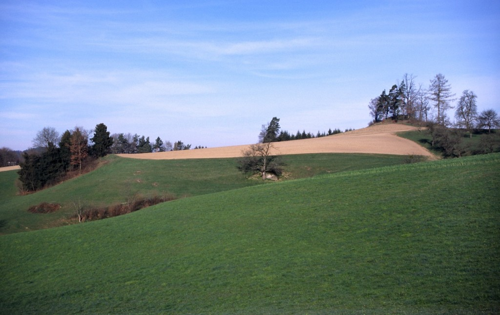 Typisches Bruthabitat auf einer Hügelkuppe mit Acker und Waldrändern
