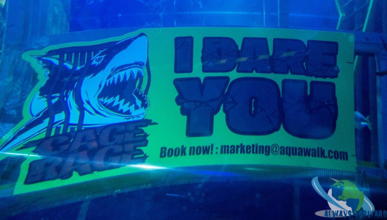 hier kann auch mit den Haien getaucht werden