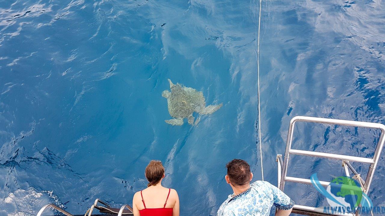 Natalie die Schildkröte besuchte uns