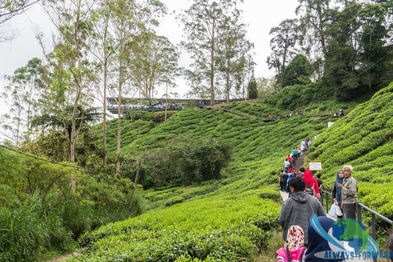 der Weg zu einer bekannten Tee-Plantage