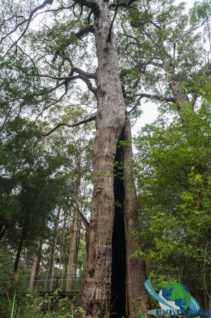 sehr grosse Bäume