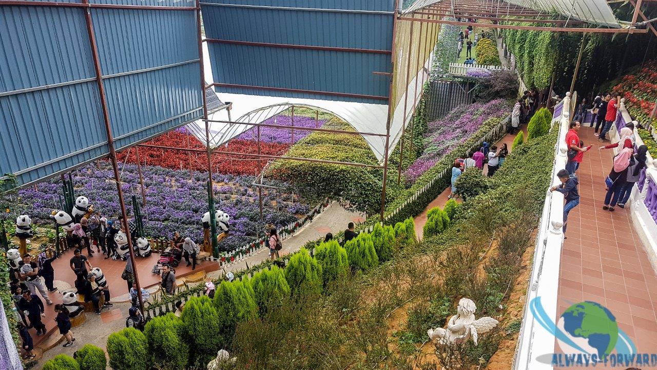 Blumen-Plantage
