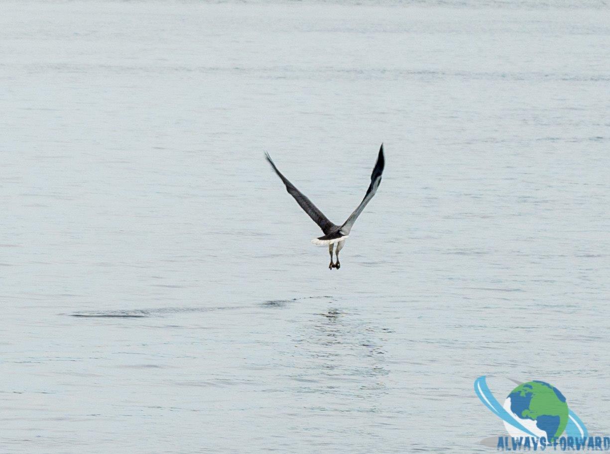ein Vogel beim fischen