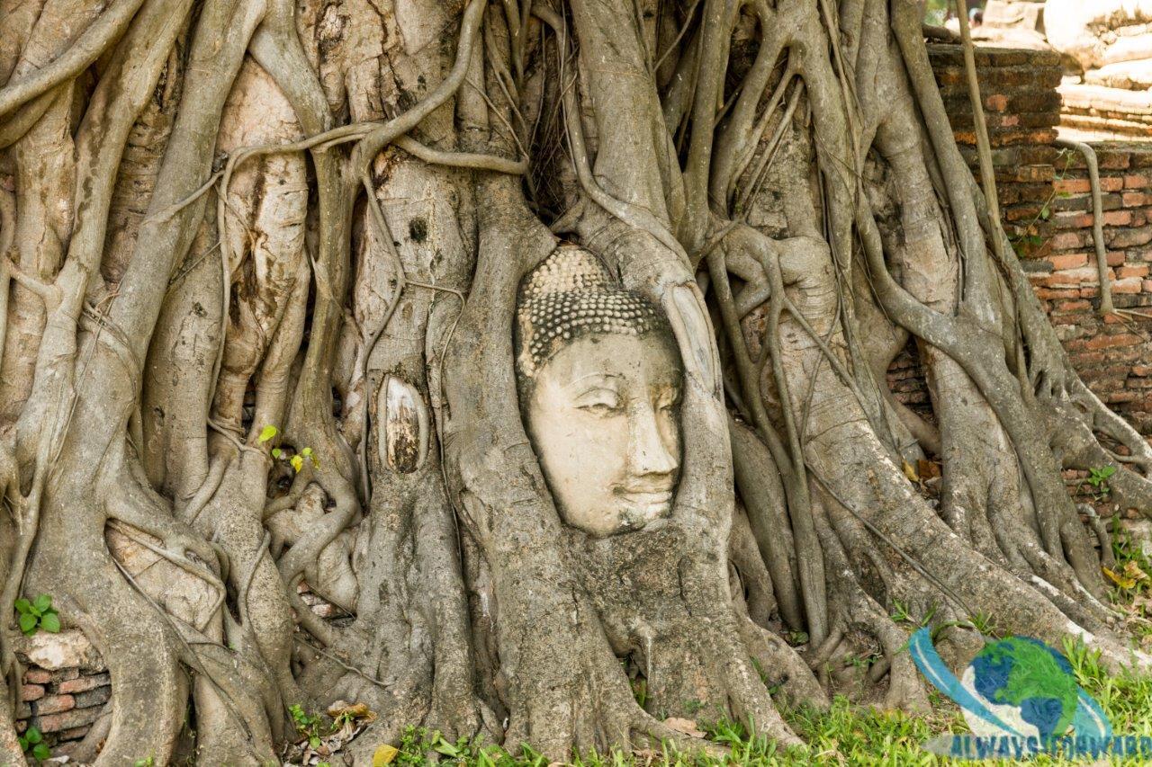 Statue im Baum