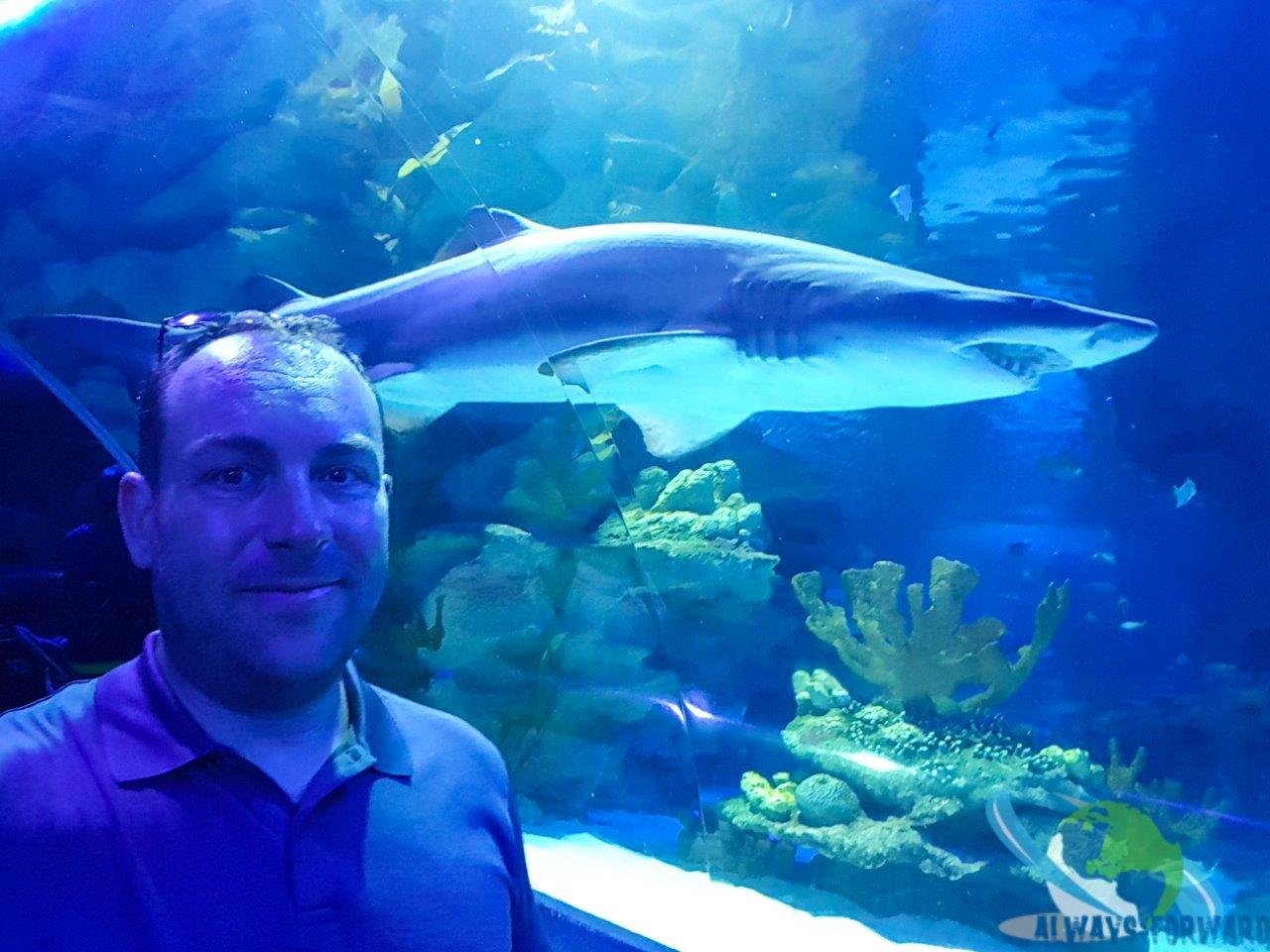 den Haien so nahe und doch so fern