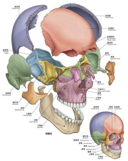 頭蓋骨の図