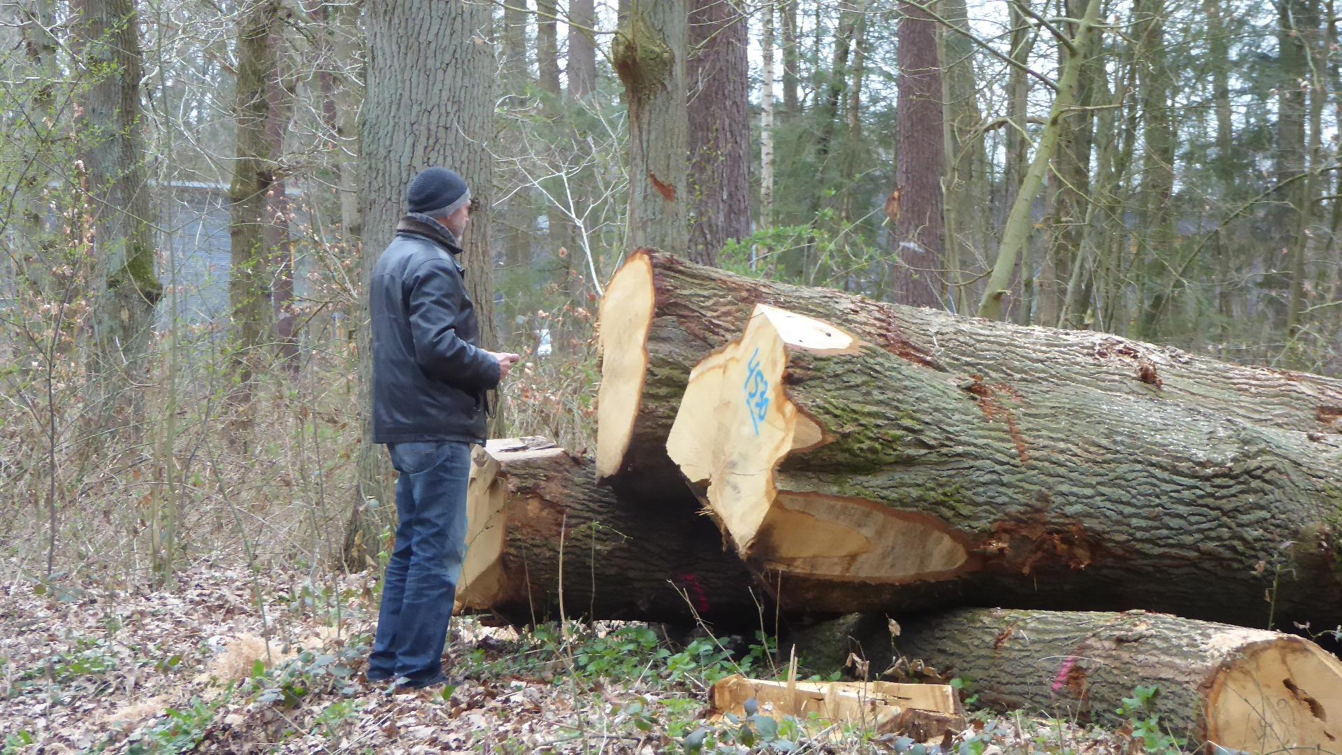Niedersachsen - Zevener Ahe:  Forstwirtschaft auf dem Holzweg