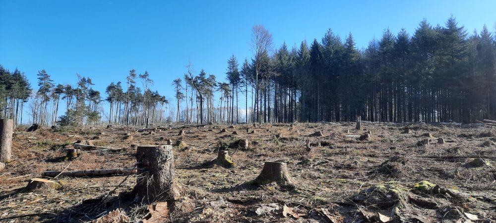 RLP: Raubbau auf der Montabaurer Höhe (unterer Westerwald)
