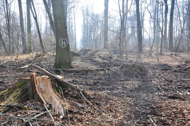 """Naturschutzgebiet """"Prinzenschneise"""" entlang des Naturlehrpfades und im Naherholungsgebiet der Stadt Weimar, gleichzeitig EU-Vogelschutz- und FFH-Gebiet """"Großer Ettersberg"""" bei Weimar, Thüringen."""