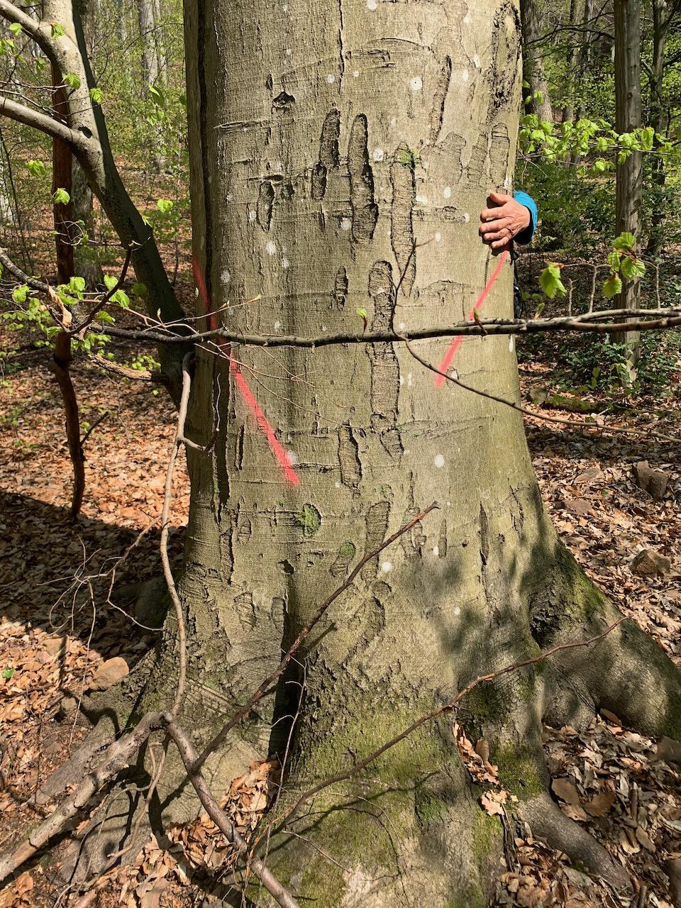 Baden-Württemberg: Mühltalwald bei Heidelberg durch hohe Einschläge bedroht