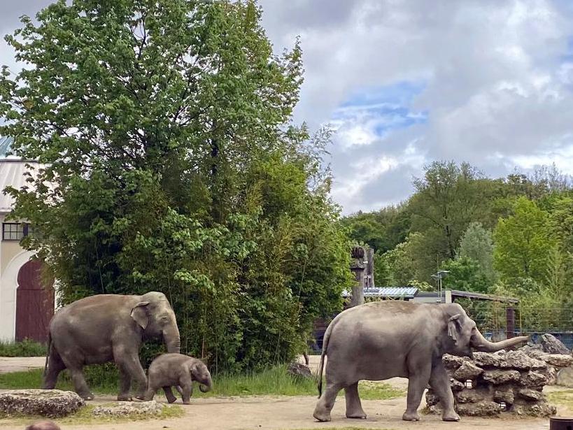 Pfingstausflug in den Tierpark Hellabrunn