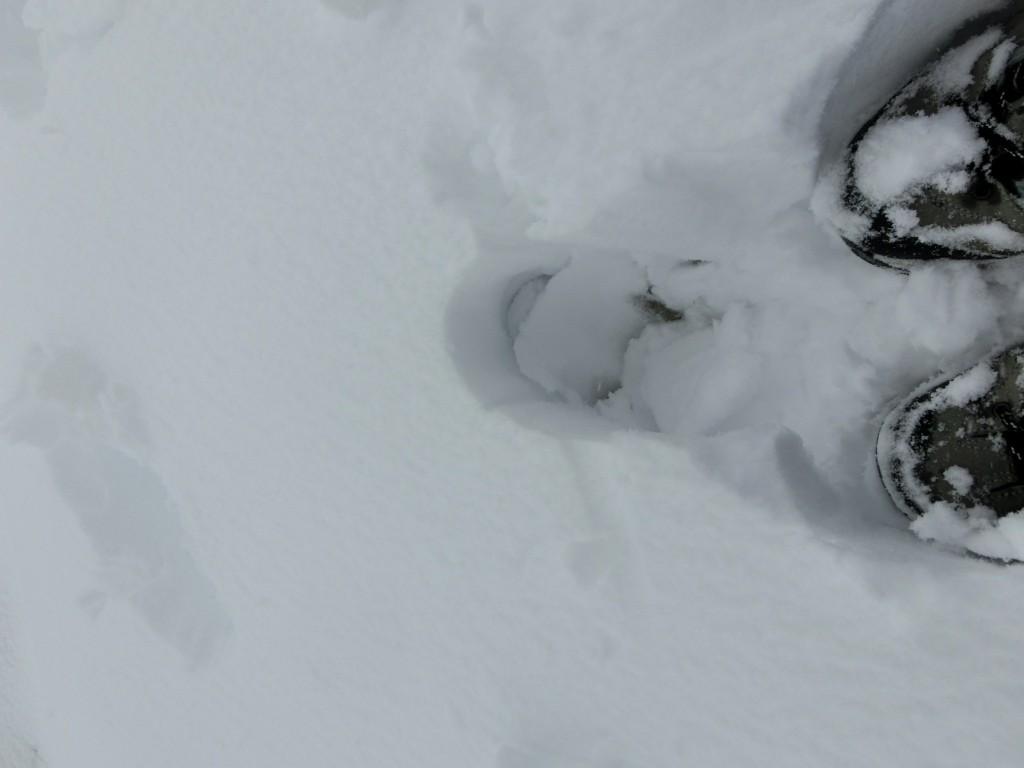 Tief eingesunken im Schnee.