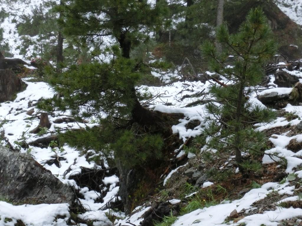 Je höher ich komme, um so mehr Schnee liegt.