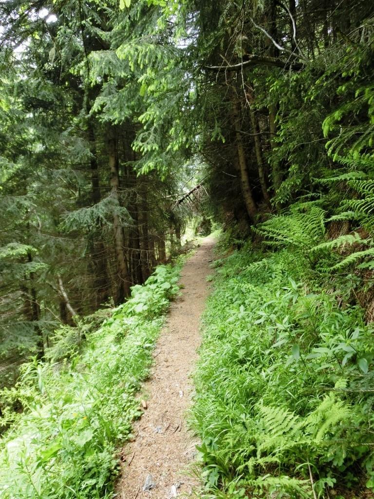 Durch Wald und Feld....