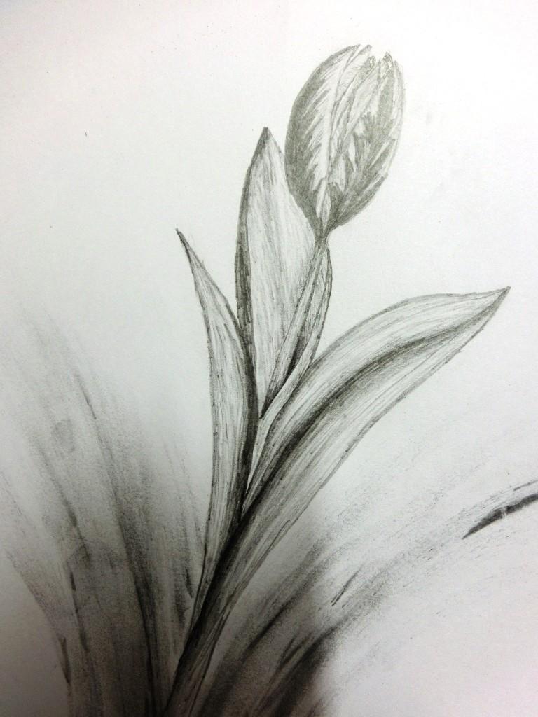 Bleistiftmalerei - Tulpe