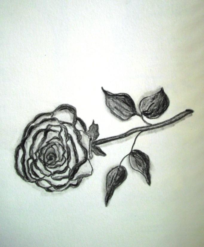 Bleistiftmalerei - Rose